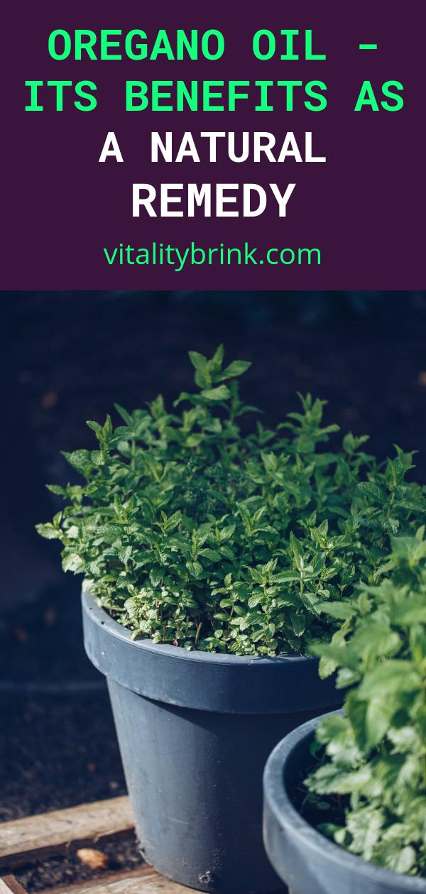 Oregano Oil - Its Benefits As a Natural Remedy